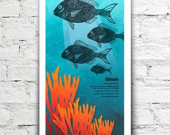 Tāmure illustration print – New Zealand native fish series. 2 sizes, limited series.
