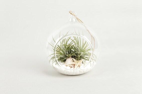 Tillandsia air plantes suspendu en verre boule cadeau ensemble - Boule en verre pour plante ...