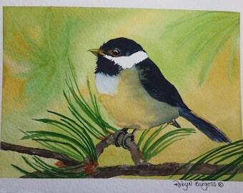 Chickadee In Pines Original Watercolor Painting