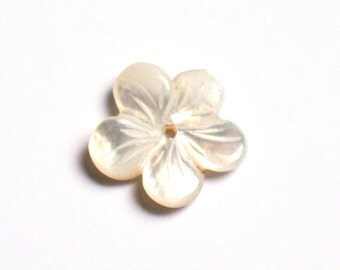 White Mother of pearl flower