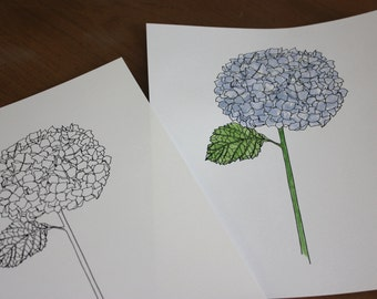 Hydrangea Line Drawing, reproduction from original ink drawing