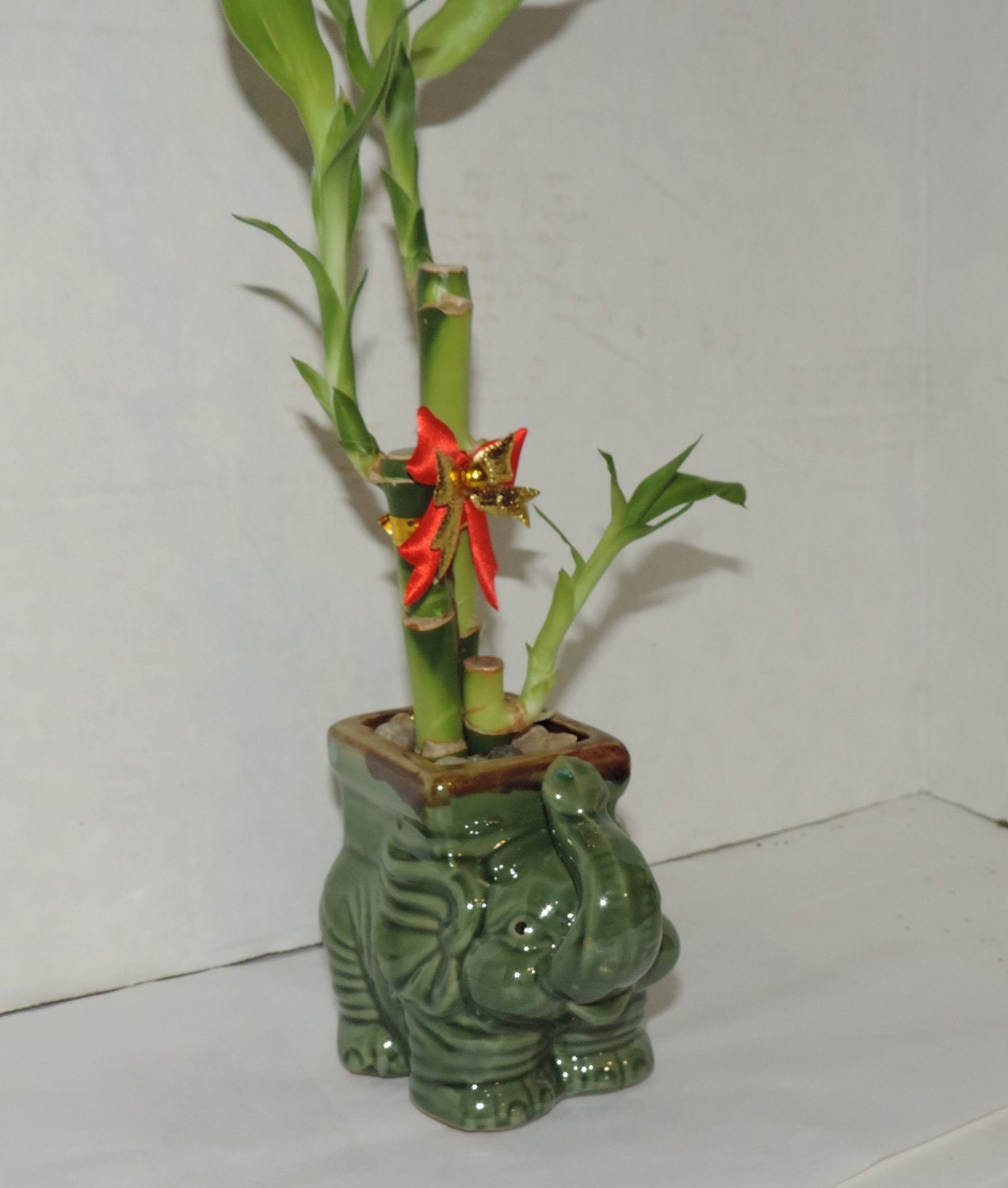 Live 3 style lucky bamboo plant arrangement with ceramic elephant 1900 reviewsmspy