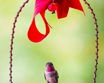 Best Copper Hummingbirds Swing - Perfect for Nectar Feeder, Hanger, & Stand