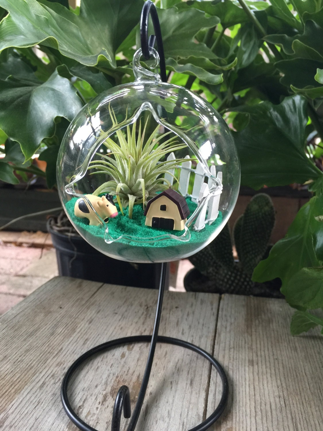 Air Plant Terrarium Kit with FREE STAND / by MicroLandscapeDesign