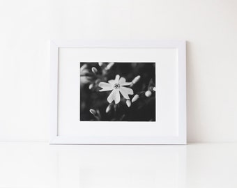 Macro phlox flower, black and white fine art nature photography print, 5x7 8x10, monochrome wall decor, affordable botanical art print