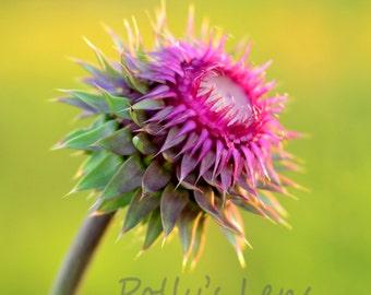 Wildflower photo, purple wildflower, minimalist photography,fine art photography, wall decor