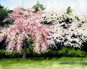 Cherry Blossoms   greetings card   hand made   handmade   landscape   flowers   blossoms   spring   flower card   cherry blossom
