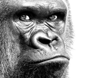 Wildlife Portrait 1 - Gorilla