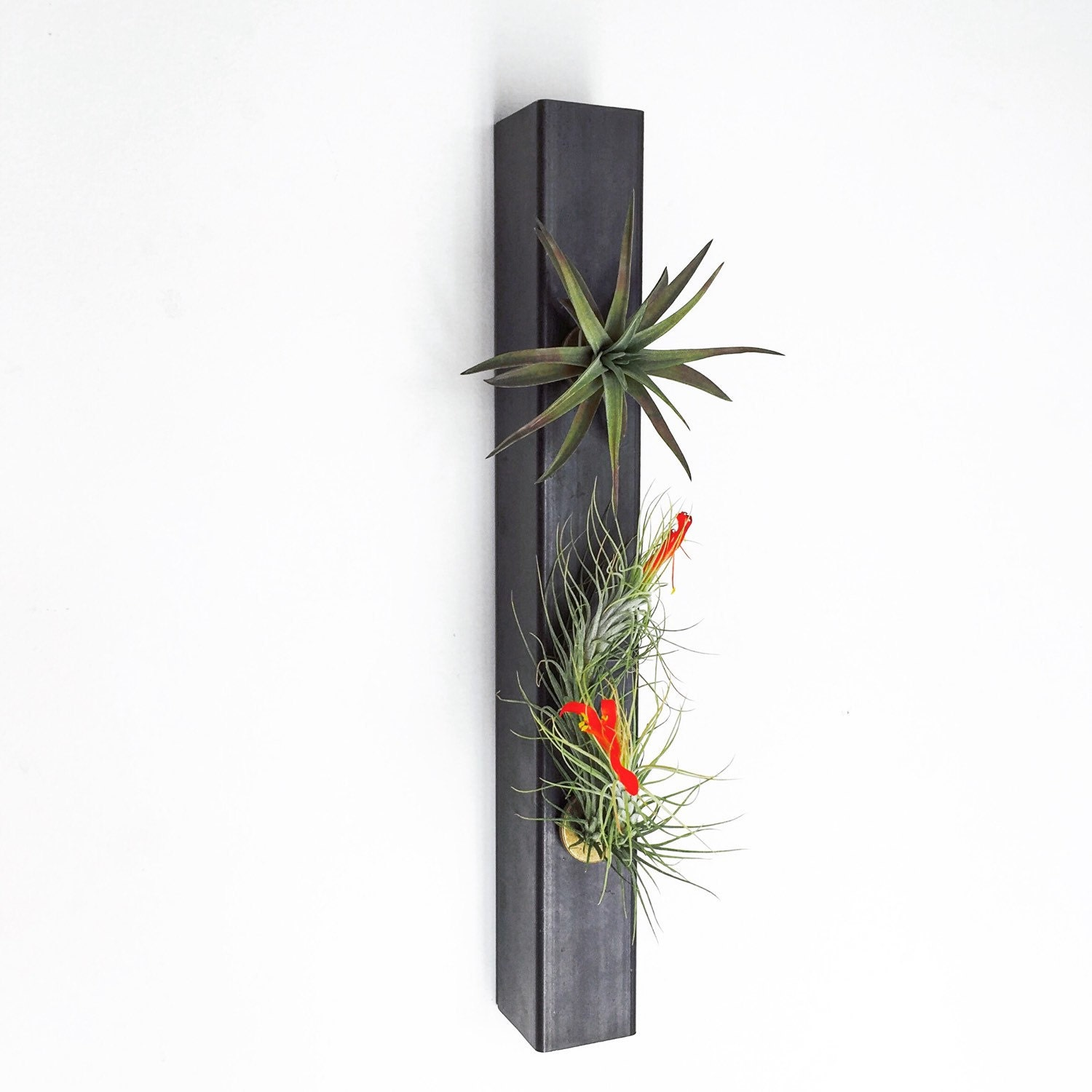 Hanging planter air planter minimalist planter steel for Air plant planters