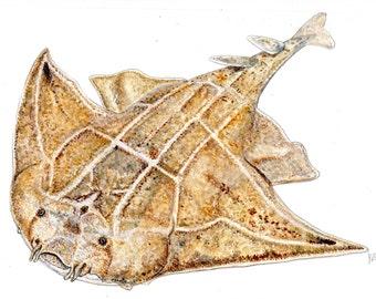 Angel shark - Original watercolour painting