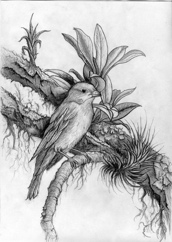 Dark Beautiful Hyper-realism Pencil Drawing Of A Bird