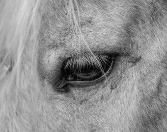 Black & White Horse Eye Canvas Photo Wall Art