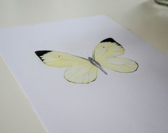 Pastel drawing lemon Butterfly