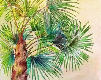 Original Drawing, Colored Pencil, Beach, Palm Tree