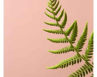 Fern Photograph - Fern - Macro - Spring - Floral Photography - Nature Photograph - Fine Art Photograph - Fern Study On Pink #2 - Green