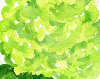Hydrangeas watercolors paintings original, 4 x 6,  Lime Green flower art, hydrangea painting, original hydrangeas watercolors floral