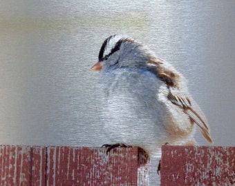 Sparrow, White-crowned, Perching Bird, Song Bird, Metal Print, Photograph, Photo Print, One of a Kind, Striped Head Bird