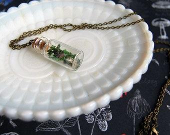 Oregon Fairy terrarium necklace- lavender moss star - apothecary style