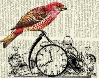 bird grosbeak with father time print