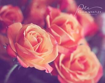 pink rose art, orange rose print, pink rose deco, pink rose photo, rose print, rose wall art, rose photograph, soft rose photo, dreamy art