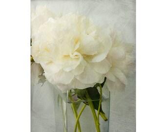 White Peony Print,  8 x 10 Print, Floral Art Print, Still Life Photography, Peony Art