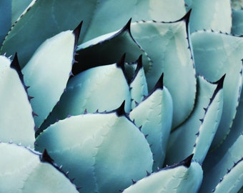 "Nature photography | blue agave leaves | fine art photography | southwest style decor | desert style art print ""Aqua Agave"""