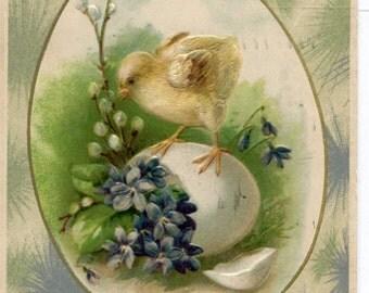 Easter postcard, vintage Easter Chick playing on big egg and violets vintage postcard