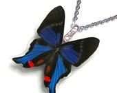 Real Butterfly Wing Necklace (WHOLE Rhetus Periander Butterfly - W104)