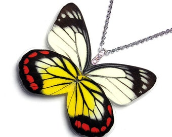 Real Butterfly Wing Necklace / Pendant (WHOLE Delias Hyparete aka The Painted Jezebel - W079)