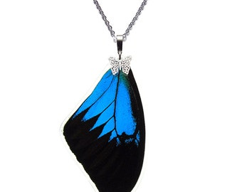 Real Butterfly Wing Pendant / Necklace (Papilio Ulysses Forewing - N019)