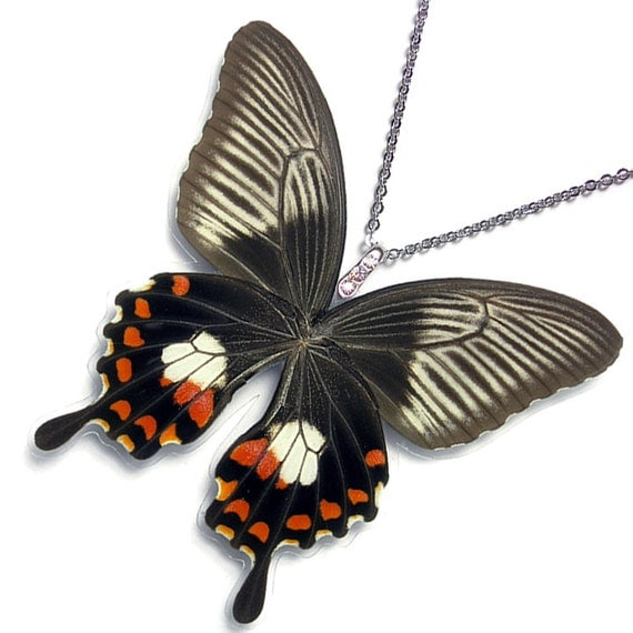 Real Butterfly Wing Necklace / Pendant (WHOLE Papilio Polytes Butterfly - Verso - W128)