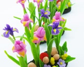 Iris Minigarden, delicate and beautiful, 1 pieces