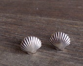 Sterling Silver Sea Shell Stud Earrings