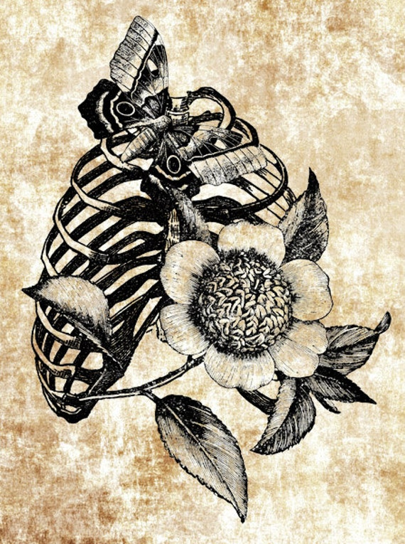 Rib Cage And Flowers Drawing Rib Cage Flower Butterfly Png