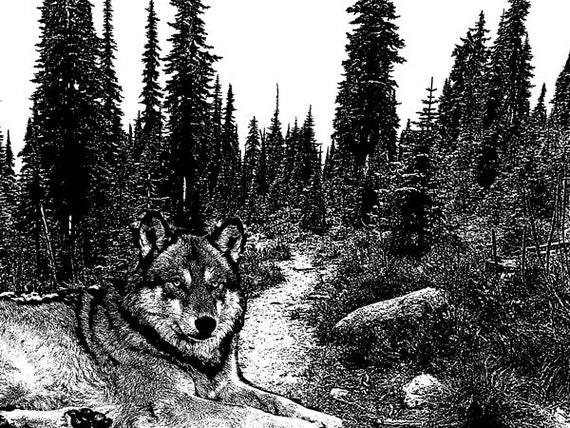 wolf in forest wildlife art printables black and white illustration png jpg graphics image digital download animals nature landscape artwork