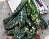 Organic Dinosaur Kale Italian Lacinato Nero Toscana Heirloom Vegetable Seeds