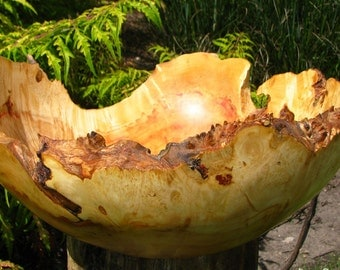Large Spikey Golden Orange box elder burl bowl