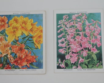 2 Vintage Flower Tobacco Cards Will's Cigarettes Collectible