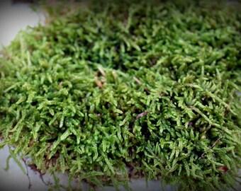 Sheet Moss-Live Moss-Carpet Moss-Terrarium Moss-Vivarium Moss-Gallon bag live moss