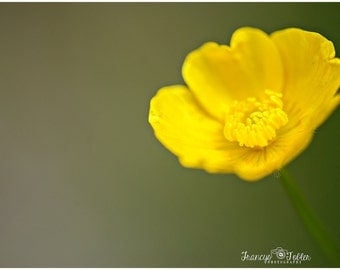 Spring Yellow Buttercup 2 Flower Fine Art Canvas wrap- wild flowers