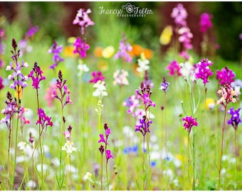 Spring Field of Wild Flowers Fine Art Canvas wrap- Purple and Pink bunch