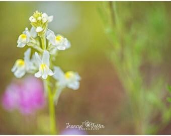 Spring White Snapdragon Flower Fine Art Canvas wrap-