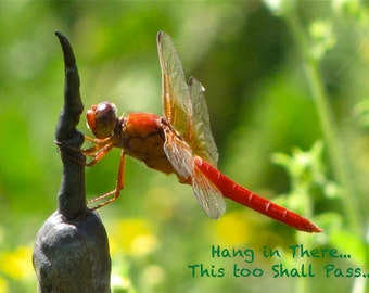 "Hang In There This Too Shall Pass- Inspirational Instant Download Dragonfly Wisdom ""This Too Shall Pass"" Daily Quotes Photo Critter  Art"