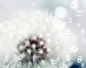 Dandelion Print, White, Blue, Baby Neutral, Nursery Decor, Flower Photography, Dandelion Seeds, Bubbles