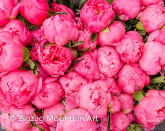 Pink peonies art for wall.  Peony flower still life wall art or wall art from still photography.  Fine art print for home decor or wall art.