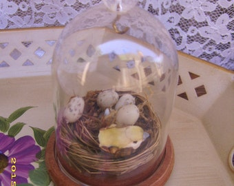 Vintage Miniature Wood Glass Dome Bird Egg Display Case