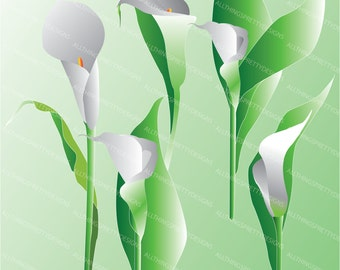 White Calla Lily Floral Clip Art High Res Graphic Scrapbooking