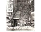 Vintage Photo Postcard. Tree House. Redwood Highway CA. Roadside America, Tallest One Room House. 1950s Paper Ephemera, Collectible.