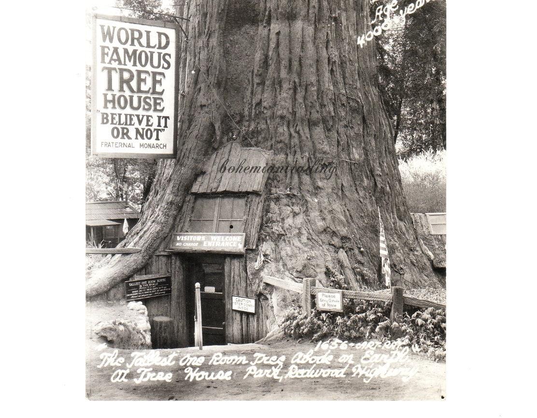 Vintage Photo Postcard Tree House Roadside By