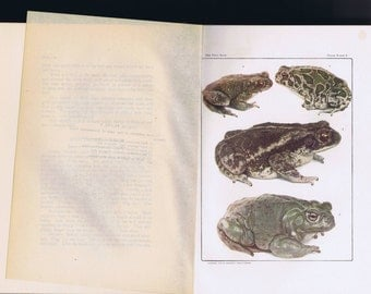 Antique Vintage The Frog Book 1908 Natural History Science Nature Animals Toads Amphibians Photographs